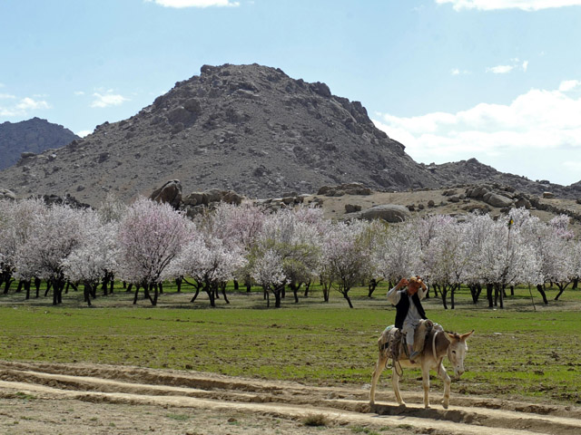 <b>Take Women Into Account.</b> The Dutch Provincial Reconstruction Team (PRT) in Uruzgan made plans to build an orchard in a central location within the community. When Civil Affairs personnel learned from that the women could not leave their children at home unattended to travel to the central location, they changed their approach and instead allocated trees to individual families.